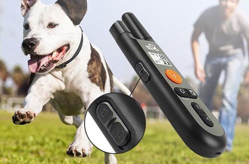 DOG CARE Rechargeable Dog Shock Collar with Training Modes, Beep, Vibration and Shock