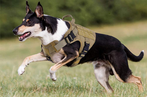 Rabbitgoo Military Large Dog Harness Vest - Dog Tactical Harness Vest